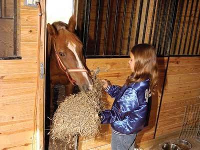 Horse Around at Heartland  Country Resort