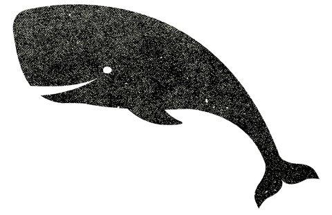 whale solo LARGE ciff