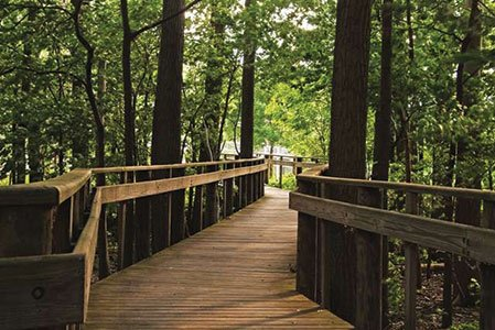 OMB1269-Marsh-boardwalk[1].jpg