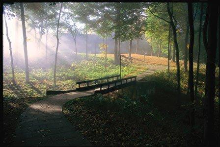 OMH9008_Trail_through_the_trees.jpg