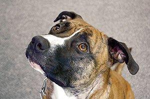buster-dons-dog.jpg