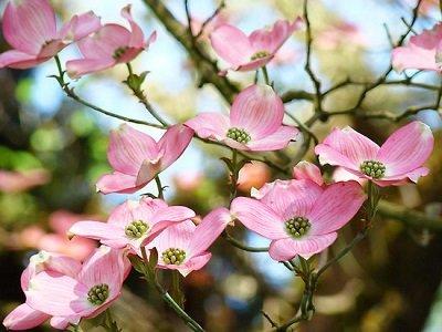 Tree Flowers Metro Parks