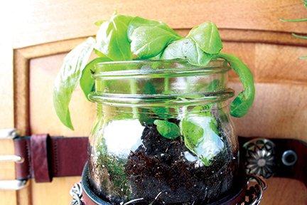 plant jar 2.jpg