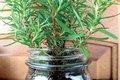 plant jar.jpg