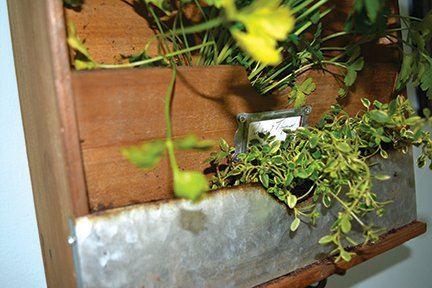 plants close up.jpg