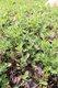 plants5.jpg