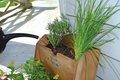 watering plants.jpg