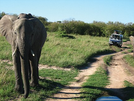 A very curious elephant.JPG