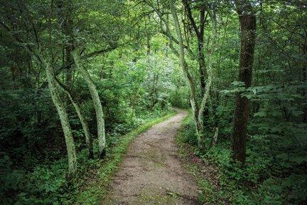 oak hill trail.jpg