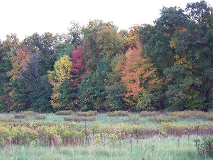 meadow2.jpg