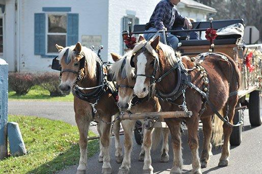 Christmas in Zoar - Horses.JPG
