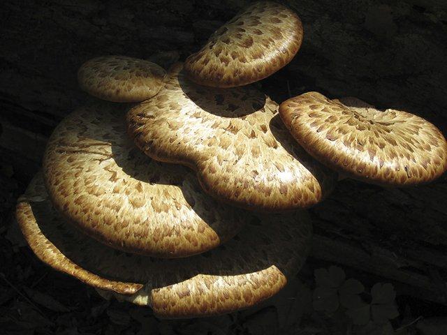 6-4 Fantastic Fungi & Magnificent Mushrooms Reception2.JPG
