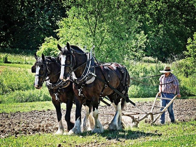 6-10 and 6-11 Sow and Grow Farm Festival & Plant Sale.jpg