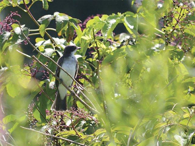 6-28 bird scavenger hunt.jpg