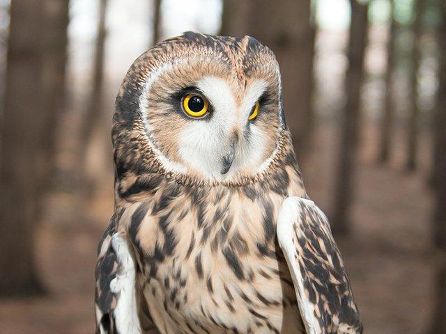 emily vaeth owl.jpg
