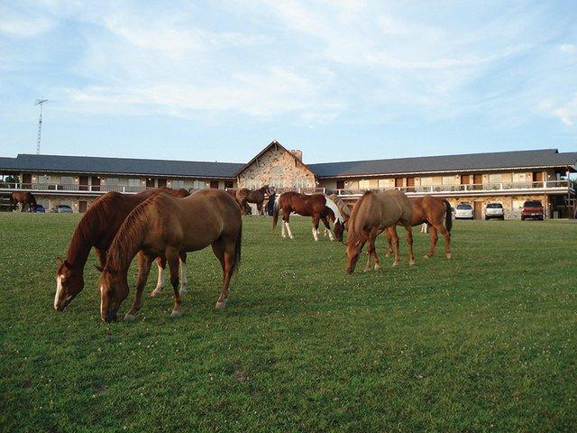 Horse_Guggisberg.jpg