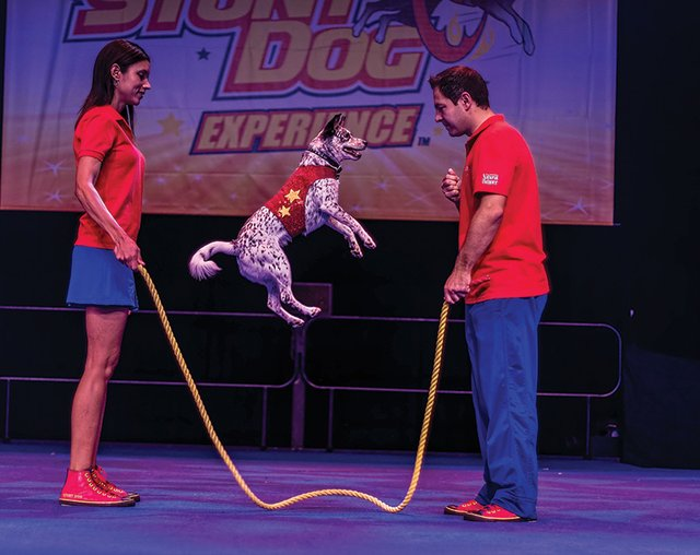 4-13 Chris Perondis Stunt Dog Experience (Photo Credit to Branson).jpg