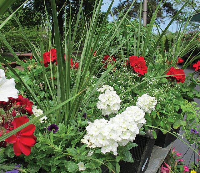 5-19 Gardening Gurus Floral Container Design.jpg