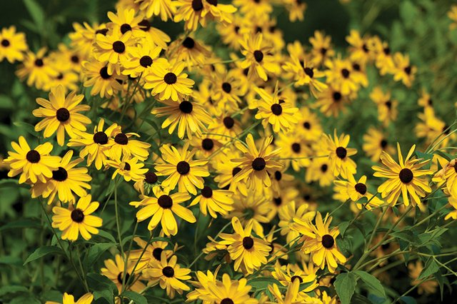 8-18 Late Summer Wildflowers(Photo Credit to Tami Hill).jpg