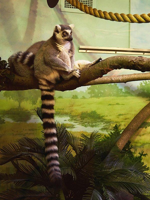 Zoo12.jpg